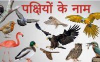 Birds Name In Hindi And English पक ष य क न म ह न द म